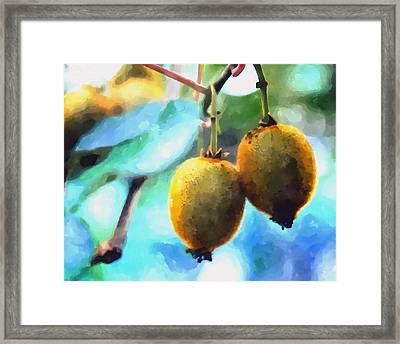 Kiwi Fruit Ripening On A Tree Framed Print by Lanjee Chee