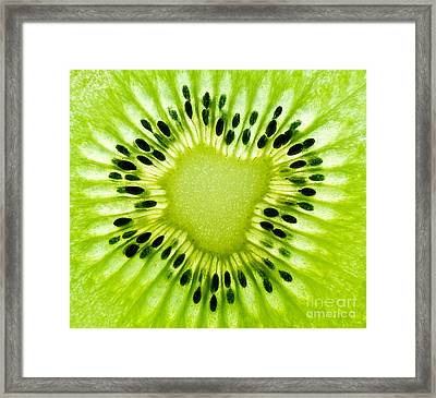 Kiwism Framed Print by Delphimages Photo Creations