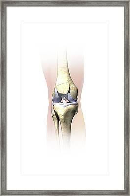 Knee Anatomy Framed Print by Henning Dalhoff