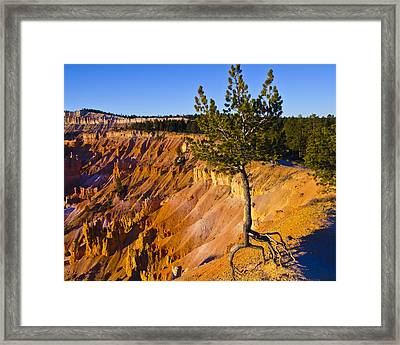 Know Your Roots - Bryce Canyon Framed Print by Jon Berghoff