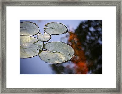 Koi  Framed Print by Mark Weaver