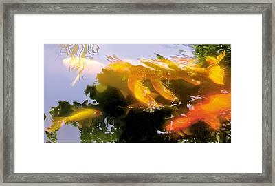 Koi Parade Framed Print by Robert Conway