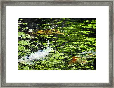 Koi Pond Framed Print by Christi Kraft
