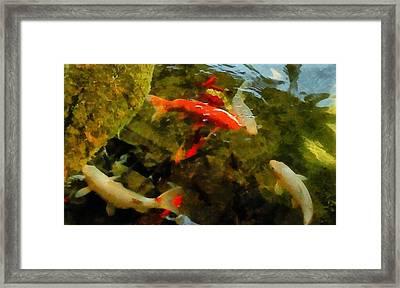 Koi Pond Framed Print by Michelle Calkins