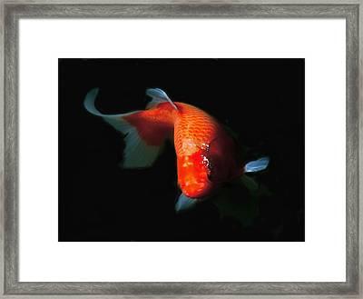 Koi Framed Print by Rona Black