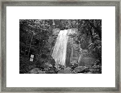 La Coca Falls El Yunque National Rainforest Puerto Rico Print Black And White Framed Print by Shawn O'Brien