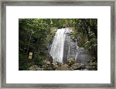 La Coca Falls El Yunque National Rainforest Puerto Rico Print Framed Print by Shawn O'Brien