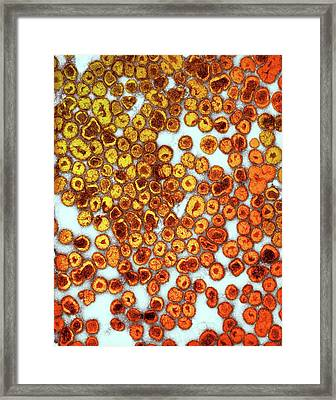 La Crosse Virus Particles Framed Print by Ami Images