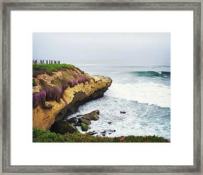 La Jolla Cliffs And Purple Flowers Framed Print by Tanya Harrison