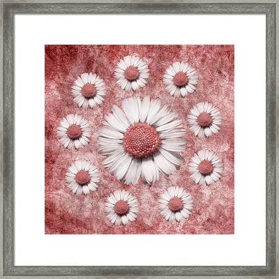 La Ronde Des Marguerites - Pink 02 Framed Print by Variance Collections