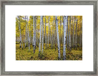 La Sal Aspen Framed Print by Mark Kiver
