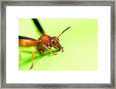 La Vespa Framed Print by Jon Woodhams