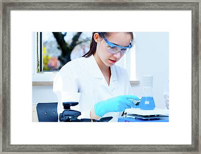 Lab Assistant Checking Samples Framed Print by Wladimir Bulgar