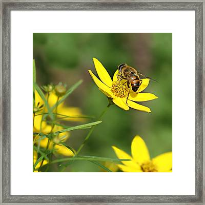 L'abeille Framed Print by Nikolyn McDonald