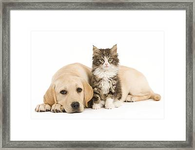 Labrador And Forest Cat Framed Print by Jean-Michel Labat