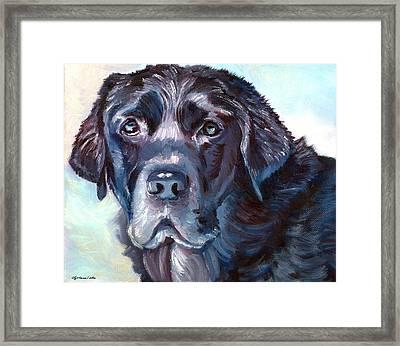 Labrador Retriever Framed Print by Lyn Cook