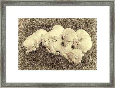 Labrador Retriever Puppies Nap Time Vintage Framed Print by Jennie Marie Schell