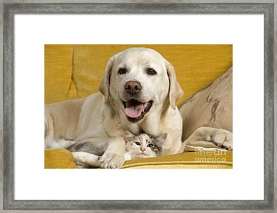 Labrador With Cat Framed Print by Jean-Michel Labat