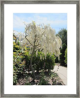 Lacework Framed Print by Dody Rogers