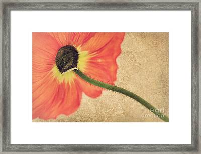 Lady Poppy Framed Print by Angela Doelling AD DESIGN Photo and PhotoArt