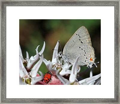 Lady Sings The Blues Framed Print by Donna Kennedy