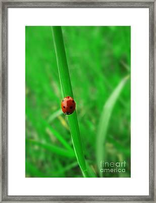 Ladybird Framed Print by Jelena Jovanovic