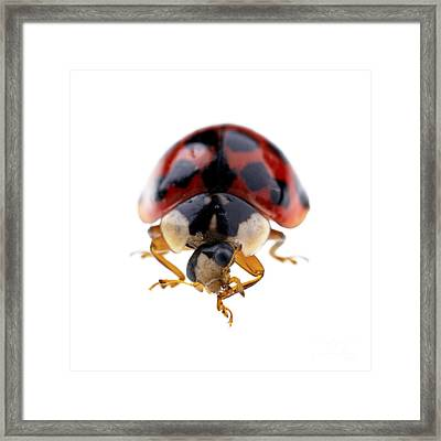 Ladybird Macro Framed Print by Jane Rix