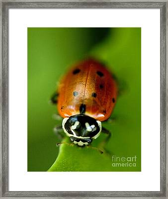Ladybug On Green Framed Print by Iris Richardson