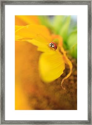 Ladybug Framed Print by Rebecca Skinner