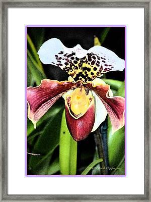 Lady's Slipper Orchids Framed Print by Sonali Gangane