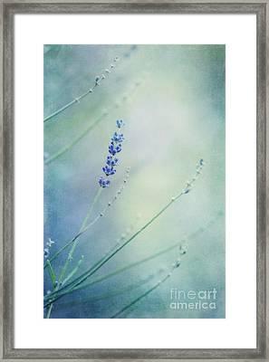Laggard Framed Print by Priska Wettstein
