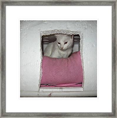 Lagniappe In A Box Framed Print by Elizabeth Sumphere