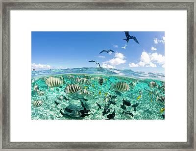 Lagoon Safari Trip Featuring Stingrays Framed Print by Michele Benoy Westmorland
