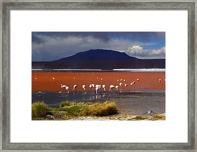 Laguna Colorada Framed Print by FireFlux Studios