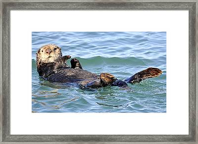 Laid Back Framed Print by AJ  Schibig