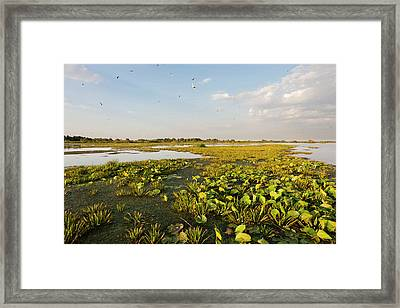 Lake In The Danube Delta, Romania Framed Print by Martin Zwick