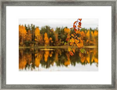 Lake Reflections Of Fall Foliage  Framed Print by Aldona Pivoriene