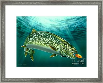 Lake Trout And Spoon Framed Print by Jon Q Wright