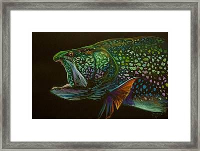 Lake Trout Portrait Framed Print by Yusniel Santos