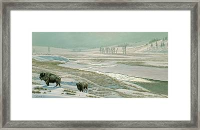 Lamar Valley - Bison Framed Print by Paul Krapf