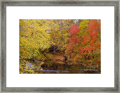 Lamprey In Fall Framed Print by Eunice Miller