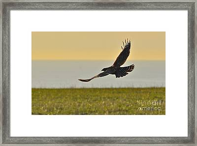 Land Sea And Sky Framed Print by Amy Fearn
