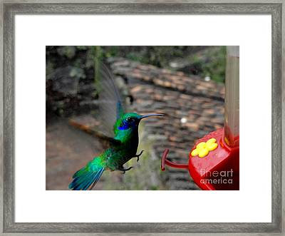 Landing Gear Down Framed Print by Al Bourassa