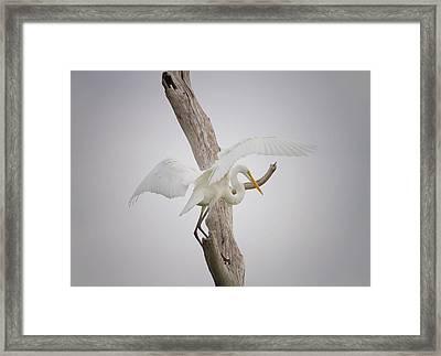 Landing Framed Print by Kim Hojnacki