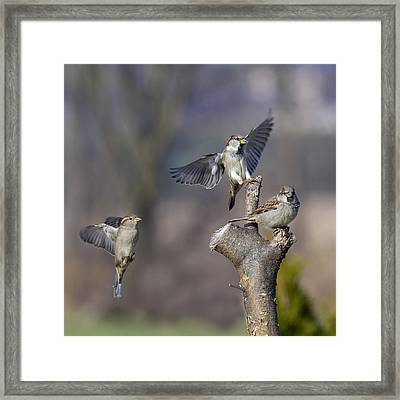 Landing Perch Framed Print by David Lester