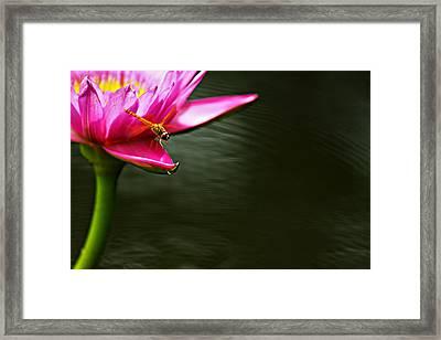 Landing Framed Print by Suradej Chuephanich