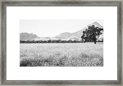 Landscape 24 M  Sac Ca Framed Print by Otri Park