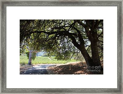 Landscape At The Jack London Ranch In The Sonoma California Wine Country 5d24583 Framed Print by Wingsdomain Art and Photography