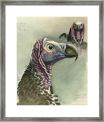 Lappet Faced Vulture Framed Print by Louis Agassiz Fuertes