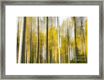 Larch Grove Blurred Framed Print by Anne Gilbert